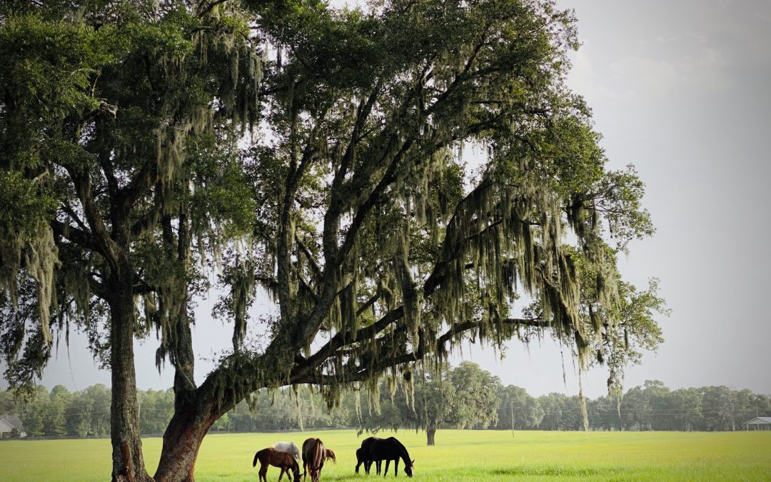 New and Renewing Members Continue to Strengthen Horse Farms Forever