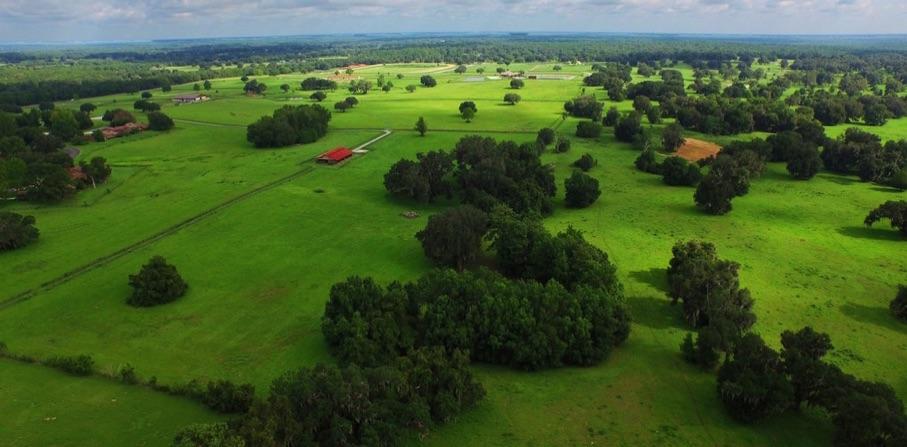 Golden Ocala Equestrian Land Proposals